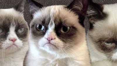 ¡La moda de los gatos en Internet ya tiene película!
