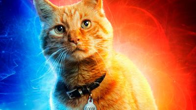 'Capitana Marvel': ¿Cuántos gatos han participado en la nueva película de Brie Larson?