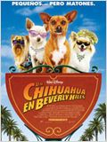 Un chihuahua en Beverly Hills