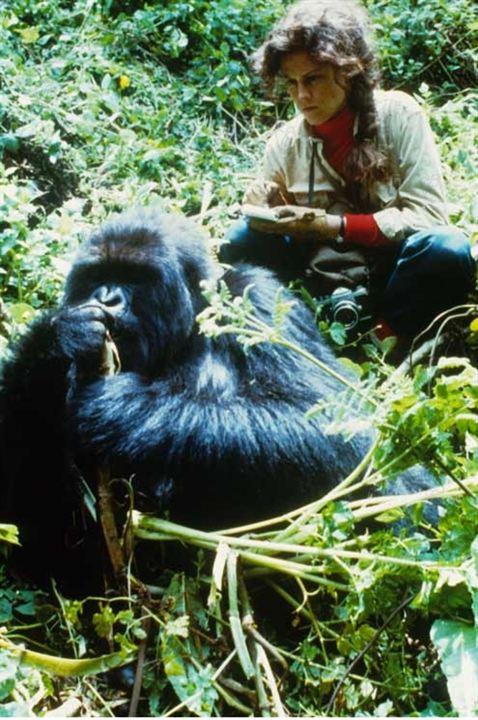 Foto de gorilas en la niebla foto 10 sobre 12 for Gorilas en la niebla