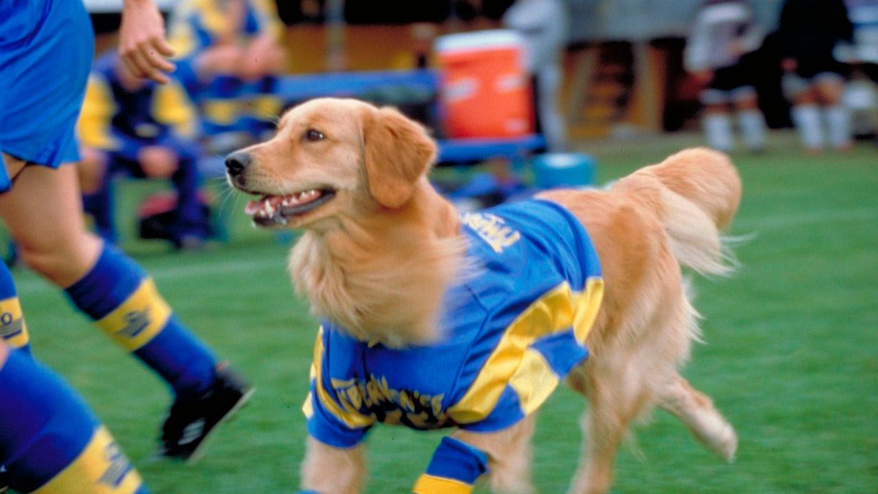 Los cachorros de Buddy : Foto