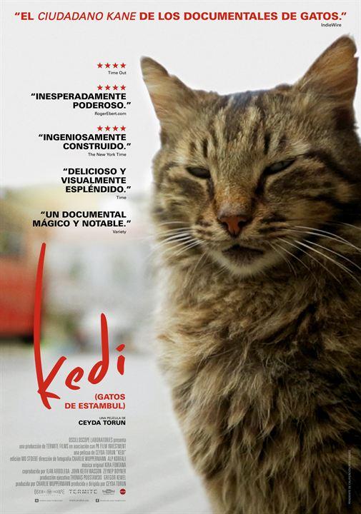 Kedi (Gatos de Estambul) : Cartel