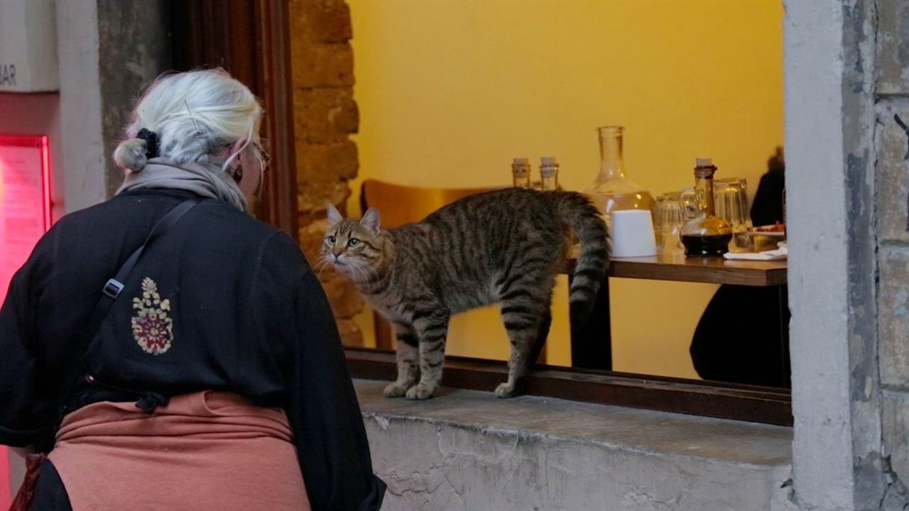 Kedi (Gatos de Estambul) : Foto