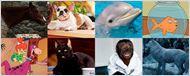 Nuestras mascotas favoritas de series de televisión