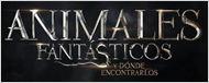'Animales fantásticos y dónde encontrarlos': La precuela de 'Harry Potter' iba a ser un falso documental