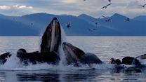 Los secretos de las ballenas Tráiler