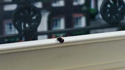 'Los Bridgerton': ¿Qué significan las abejas que vemos en la serie de Netflix?