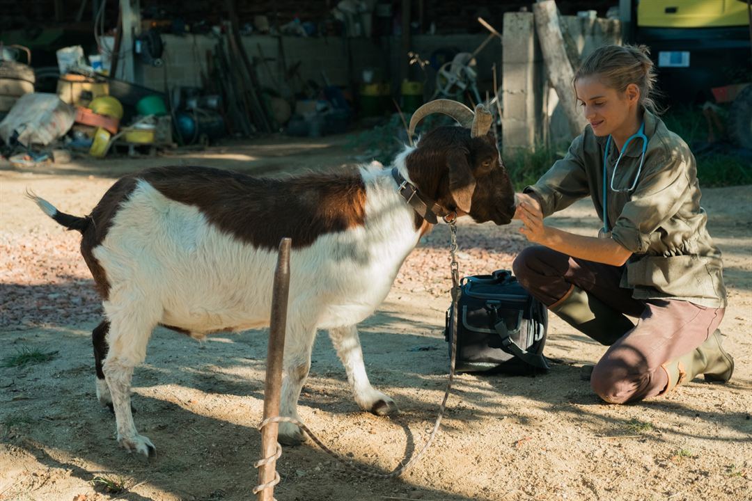 Una veterinaria en la Borgoña: Noémie Schmidt
